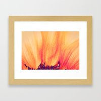 Sunflower II Framed Art Print