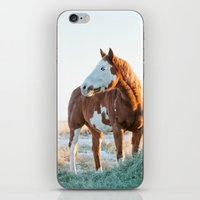 Pferd iPhone & iPod Skin