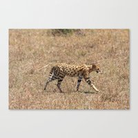Serval Cat  Canvas Print