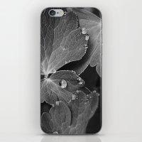 Black & White Spring  iPhone & iPod Skin