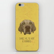 Golden Lab Print iPhone & iPod Skin
