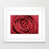 Raindrop Rose Framed Art Print