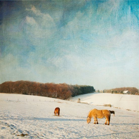 Horses on a Winter day Art Print