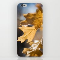 Winter Oak iPhone & iPod Skin