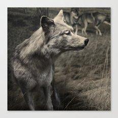Tom Feiler Wolf Canvas Print