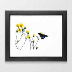 Butterfly Prairie Framed Art Print