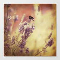 {flight of the bumblebee} Canvas Print