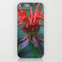 Scarlet Bee Balm {Monarda didyma L.} iPhone 6 Slim Case