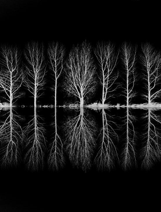 Echo In The Trees Art Print