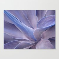 Shades Of Lilac Agave At… Canvas Print