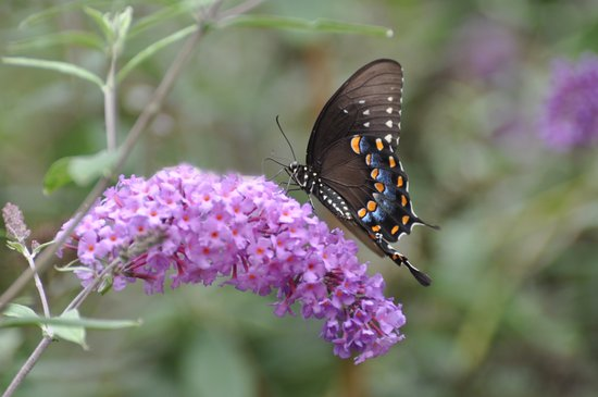 ✿ Butterfly εїз  Art Print
