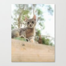 What's up kitty? Canvas Print