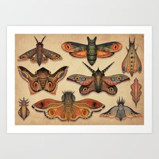 The Collection Art Print