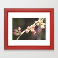 red buds Framed Art Print