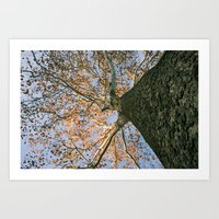 Fall is in the Air (and on the Leaves) Art Print