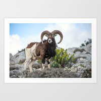 The Mouflon 8152 Art Print