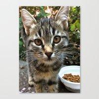 Tabby Cat Kitten Making Eye Contact Canvas Print