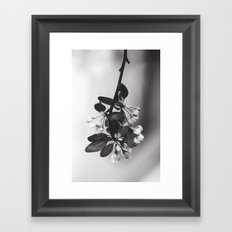 spring sprung Framed Art Print