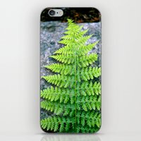 Little Tree iPhone & iPod Skin