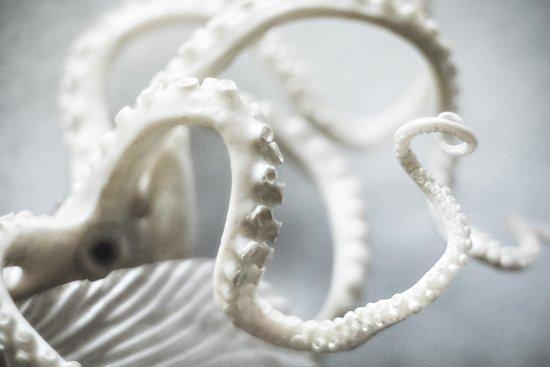octopus | fig. 01 Canvas Print