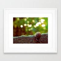 Mini Snail Framed Art Print