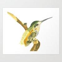 Golden Beauty Hummingbir… Art Print