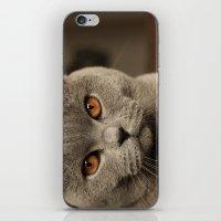 Diesel, The Cat - (close… iPhone & iPod Skin