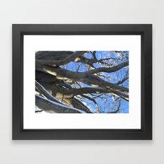 European Beech Tree Bran… Framed Art Print