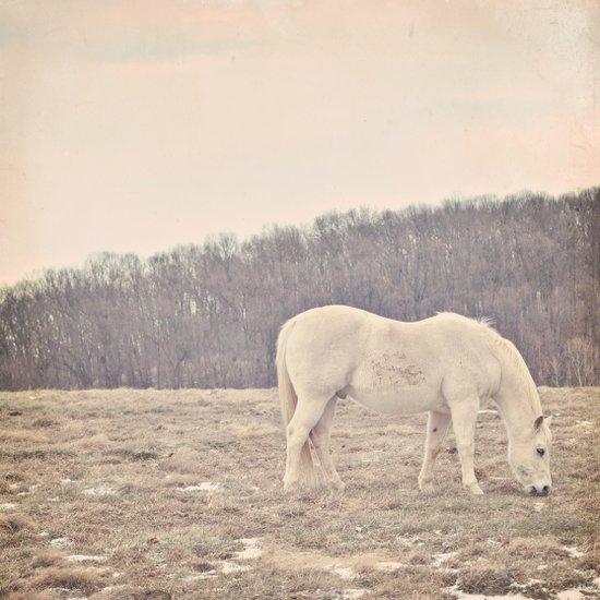 Pretty White Pony  Art Print