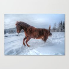 Fire and Ice - Equine Photography Canvas Print