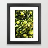 Oranges In Production Framed Art Print