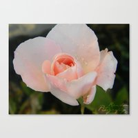 rainy flower Canvas Print