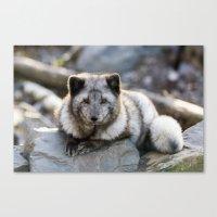 Vulpes Lagopus Canvas Print