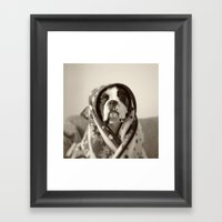 Obi Wan (Buck the world's most lovable boxer dog) Framed Art Print