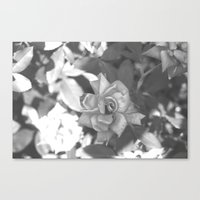 Summer Roses Canvas Print