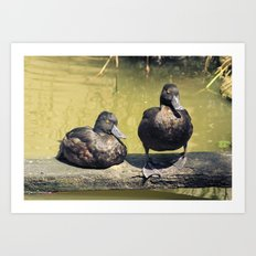 Sitting ducks Art Print