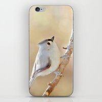 Sunlit Titmouse iPhone & iPod Skin