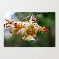 Yucatan Orchid Canvas Print