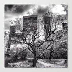 Central Park Tree. Canvas Print
