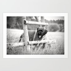 little adventurer - puppy dog Art Print