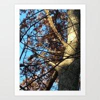 Pileated Woodpecker Amid… Art Print