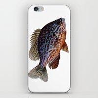 pumkinseed iPhone & iPod Skin
