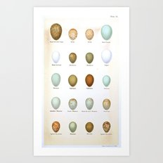 Vintage Bird Eggs  Art Print