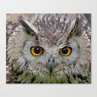 Canvas Print featuring Owl Eyes by Fran Walding