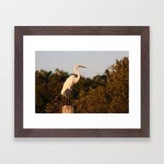 The great egret  Framed Art Print