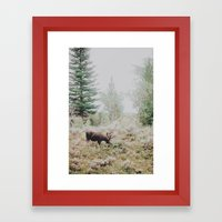 Moose 1 Framed Art Print
