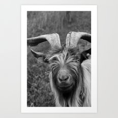 Billy-Goat no.1 Art Print
