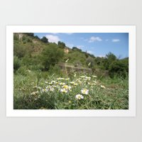 Calabrian Wild Flower 02 Art Print