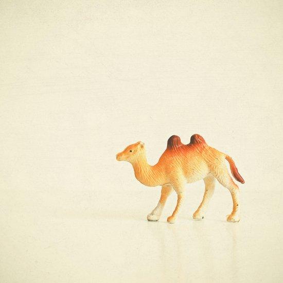 Cunning Camel Art Print