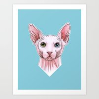Sphynx cat portrait Art Print